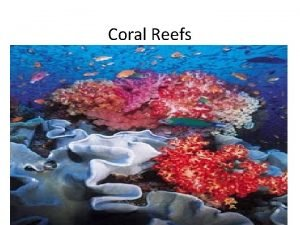 Coral Reefs Coral Reefs Coral Reefs Warm shallow