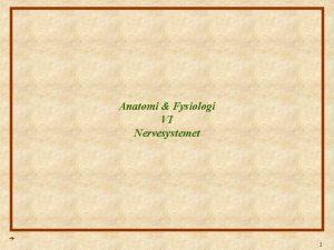 Anatomi Fysiologi VI Nervesystemet 1 Anatomi Fysiologi Lektion