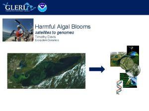 Harmful Algal Blooms satellites to genomes Timothy Davis