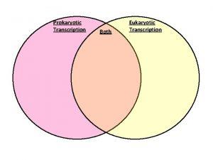 Prokaryotic Transcription Both Eukaryotic Transcription Prokaryotic Transcription 1
