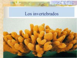 Los invertebrados Principales caractersticas n o o o