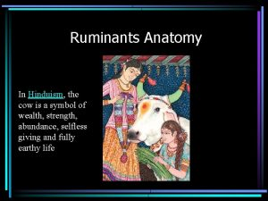 Ruminants Anatomy In Hinduism the cow is a