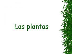 Las plantas Las plantas son seres vivos que