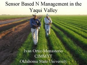 Sensor Based N Management in the Yaqui Valley