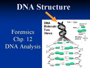 DNA Structure Forensics Chp 12 DNA Analysis DNA