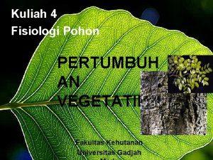 Kuliah 4 Fisiologi Pohon PERTUMBUH AN VEGETATIF Fakultas