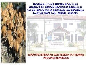 PROGRAM DINAS PETERNAKAN DAN KESEHATAN HEWAN PROVINSI BENGKULU