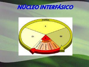 NCLEO INTERFSICO Forma y nmero Distintos tipos de