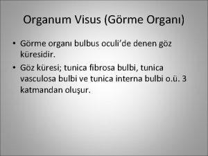 Organum Visus Grme Organ Grme organ bulbus oculide