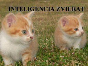 INTELIGENCIA ZVIERAT Inteligencia zvierat o o o Preo