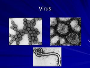 Virus Virus Principali caratteristiche dei virus Sono agenti