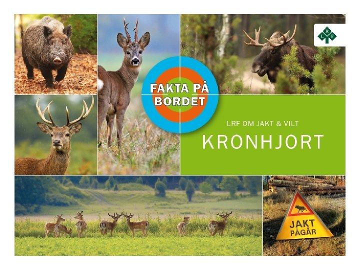 KRONHJORT Kronhjort Storlek Handjur 200 230 kg vuxen