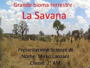 Grande bioma terrestre La Savana Presentazione Scienze di