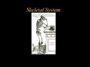 Skeletal System Skeletal System w Adult Human has