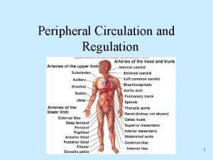 Peripheral Circulation and Regulation 1 Peripheral Circulatory System