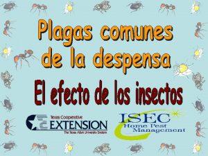 Identificacin Identifiquen bien la plaga Desinfeccin Limpien con