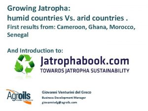 Growing Jatropha humid countries Vs arid countries First