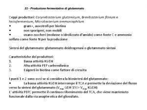 Ceppi produttori Corynebacterium glutamicum Brevibacterium flavum e lactofermentum