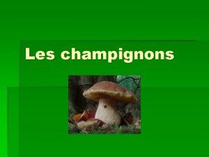 Les champignons Ce quil faut savoir Depuis 2002