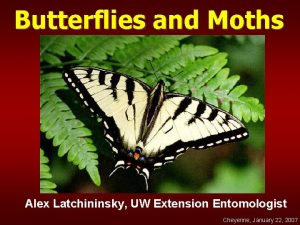 Butterflies and Moths Alex Latchininsky UW Extension Entomologist