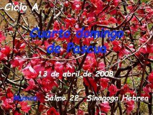 Ciclo A Cuarto domingo de Pascua 13 de
