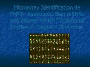 Microarray Identification de FMRP Associated Bian m RNAs