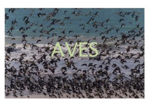 AVES Ciri khusus tubuh tertutup oleh bulu Ciri