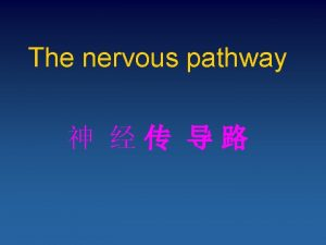 The nervous pathway Sensory Pathways 1 proprioceptive and