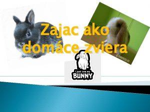 Zajac ako domce zviera Prezentcia obsahuje Nae zajace