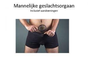 Mannelijke geslachtsorgaan Inclusief aandoeningen Mannelijke genitalin Gonaden Sperma