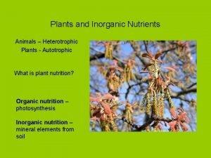 Plants and Inorganic Nutrients Animals Heterotrophic Plants Autotrophic