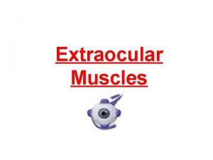 Extraocular Muscles Muscles of the orbit They are