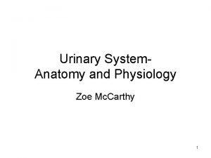 Urinary System Anatomy and Physiology Zoe Mc Carthy