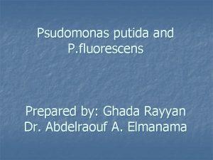 Psudomonas putida and P fluorescens Prepared by Ghada