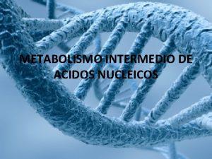 METABOLISMO INTERMEDIO DE ACIDOS NUCLEICOS Metabolismo de cidos