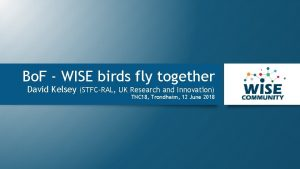 Bo F WISE birds fly together David Kelsey