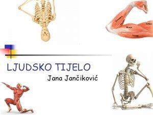 LJUDSKO TIJELO Jana Janikovi Osnovni dijelovi ljudskog tijela