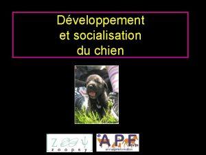 Dveloppement et socialisation du chien Introduction Les tapes