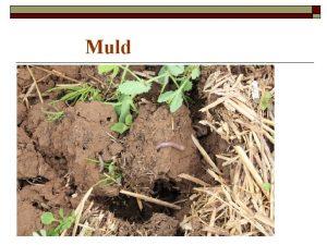 Muld Muld on maakoore pindmine kobe kiht mis