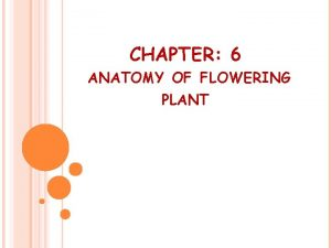 CHAPTER 6 ANATOMY OF FLOWERING PLANT Anatomy The
