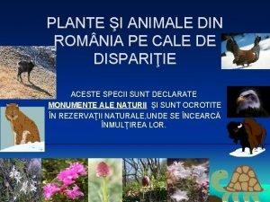 PLANTE I ANIMALE DIN ROM NIA PE CALE