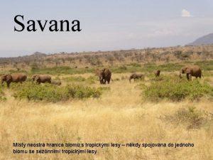 Savana Msty neostr hranice biomu s tropickmi lesy