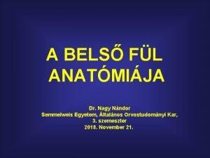 A BELS FL ANATMIJA Dr Nagy Nndor Semmelweis