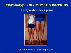 Morphotypes des membres infrieurs Analyse dans les 3