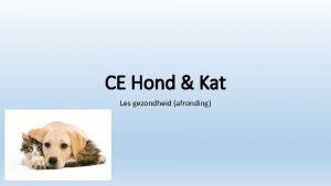 CE Hond Kat Les gezondheid afronding Wat gaan