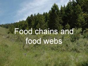 Food chains and food webs We Are Learning