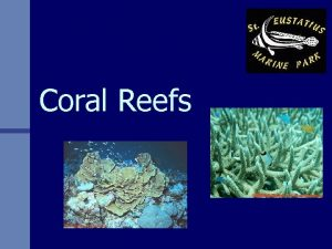 Coral Reefs What is Coral n GIANT STRUCTURES