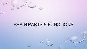 BRAIN PARTS FUNCTIONS BRAIN STRUCTURES FUNCTIONS BRAIN FUNCTIONS
