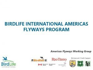 BIRDLIFE INTERNATIONAL AMERICAS FLYWAYS PROGRAM Americas Flyways Working