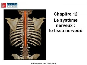 Chapitre 12 Le systme nerveux le tissu nerveux